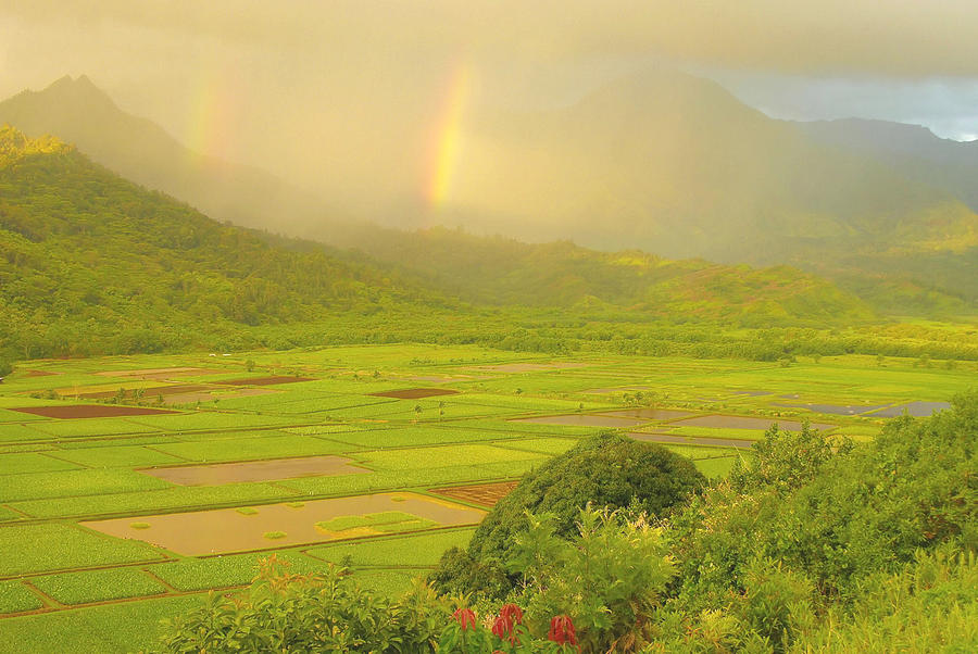 Hanalei Valley Rainbows - Kauai Photograph