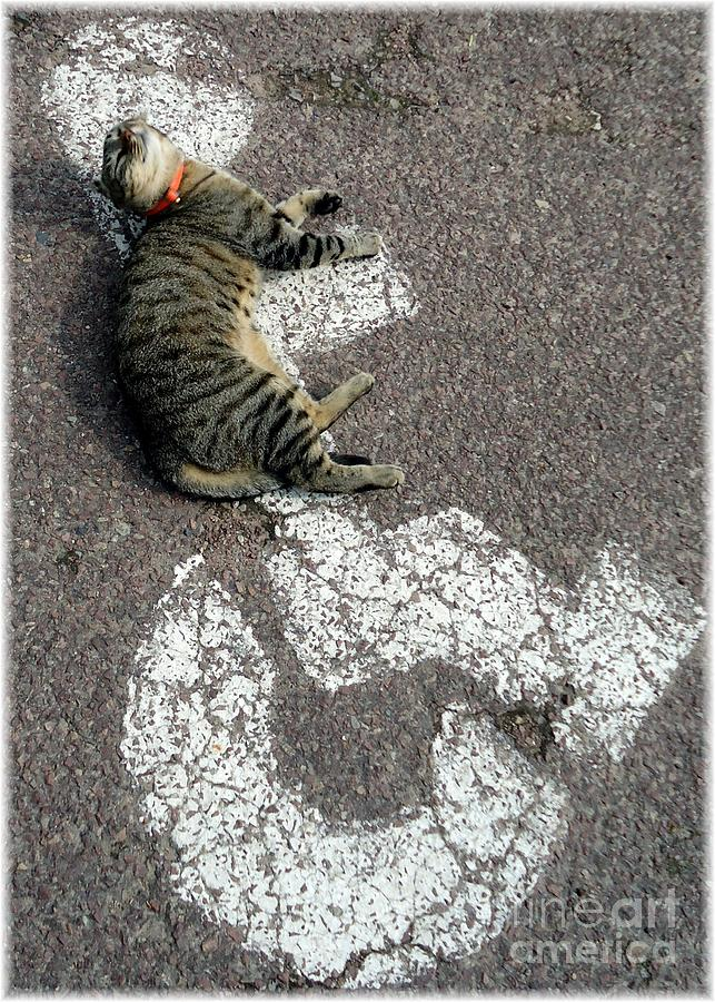 Cat Photograph - Handicat Parking by Barbie Corbett-Newmin
