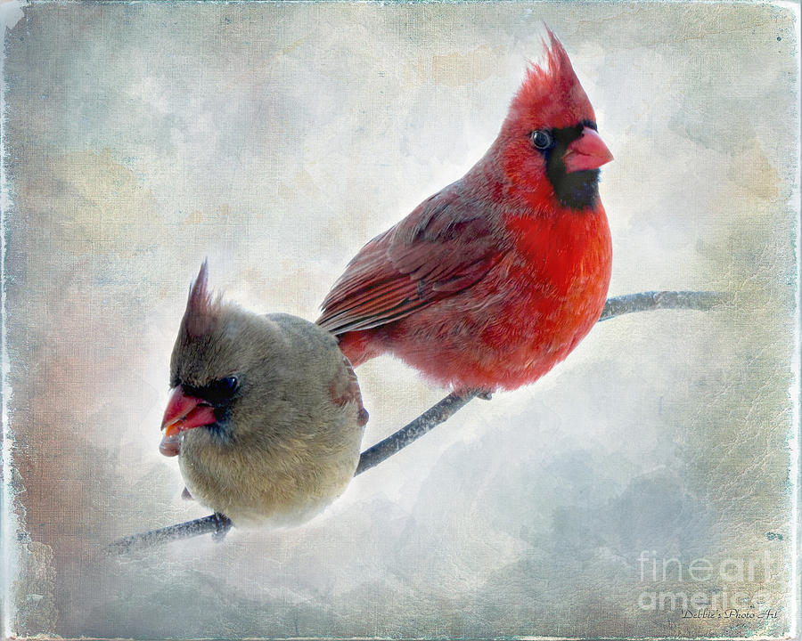 Nature Photograph - Handsome Couple IIi by Debbie Portwood