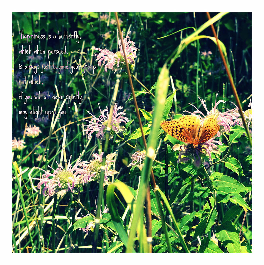 Happiness Is A Butterfly Photograph  - Happiness Is A Butterfly Fine Art Print