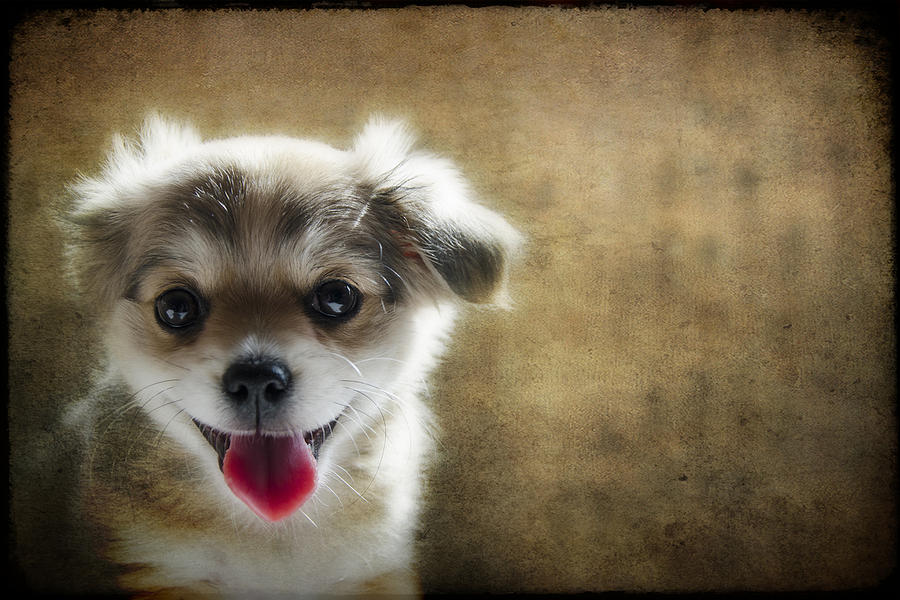 Happiness Is A Little Puppy Photograph  - Happiness Is A Little Puppy Fine Art Print
