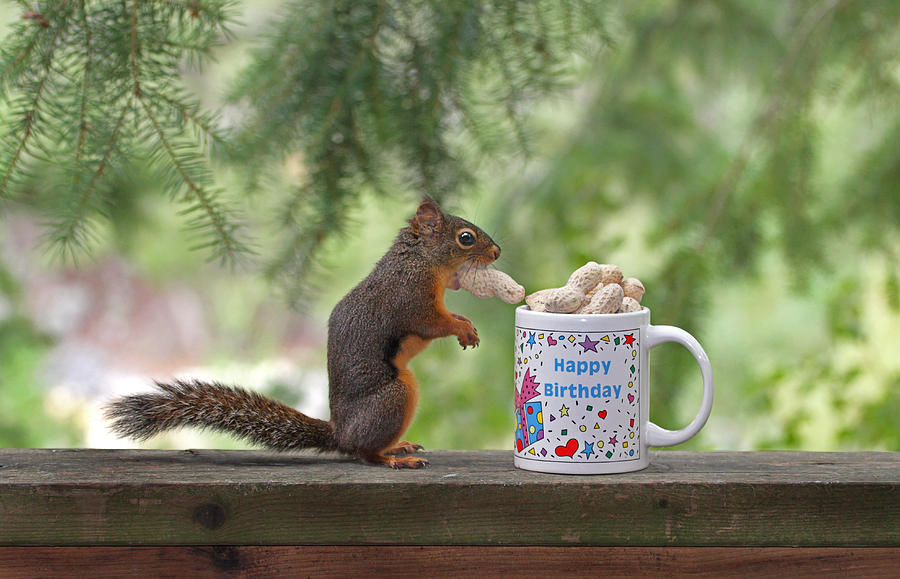 Happy Birthday Squirrel Photograph By Peggy Collins