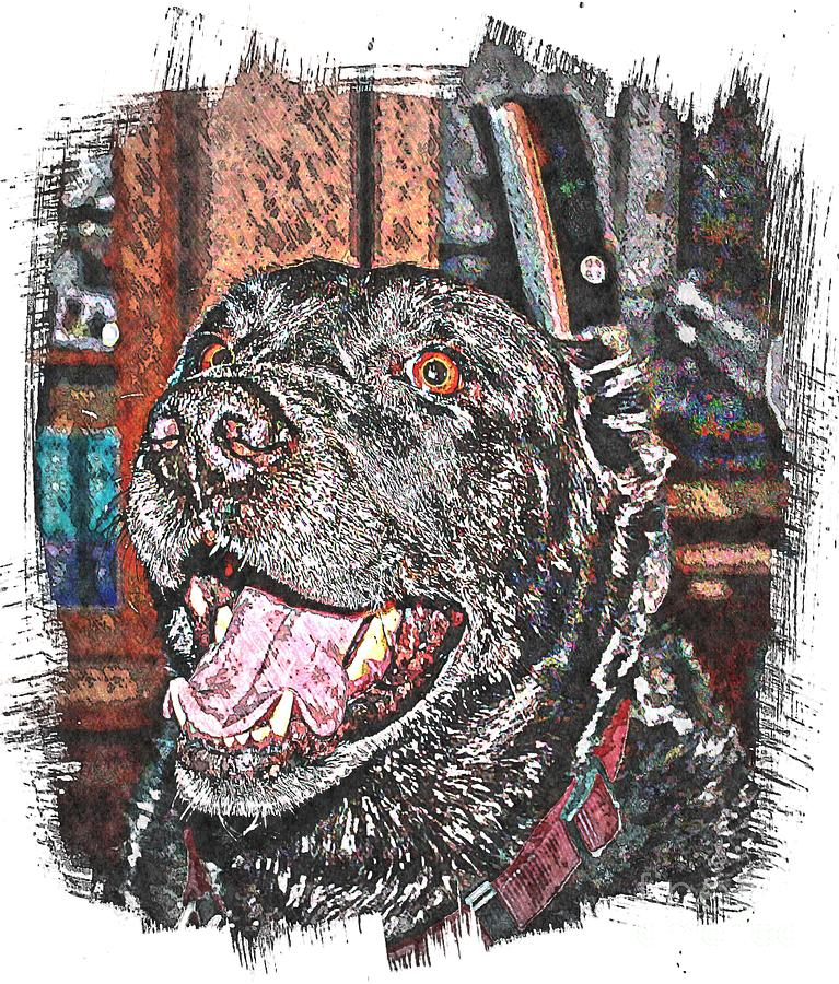 Happy Black Lab  Photograph  - Happy Black Lab  Fine Art Print