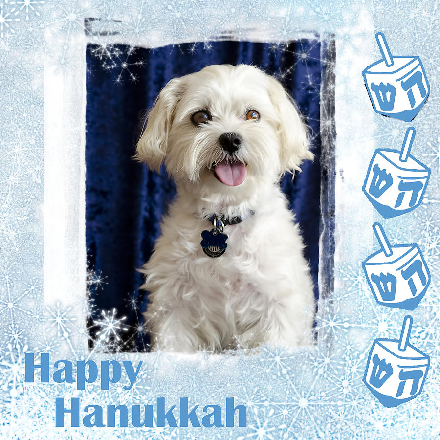 Happy Hanukkah Maltipoo Photograph