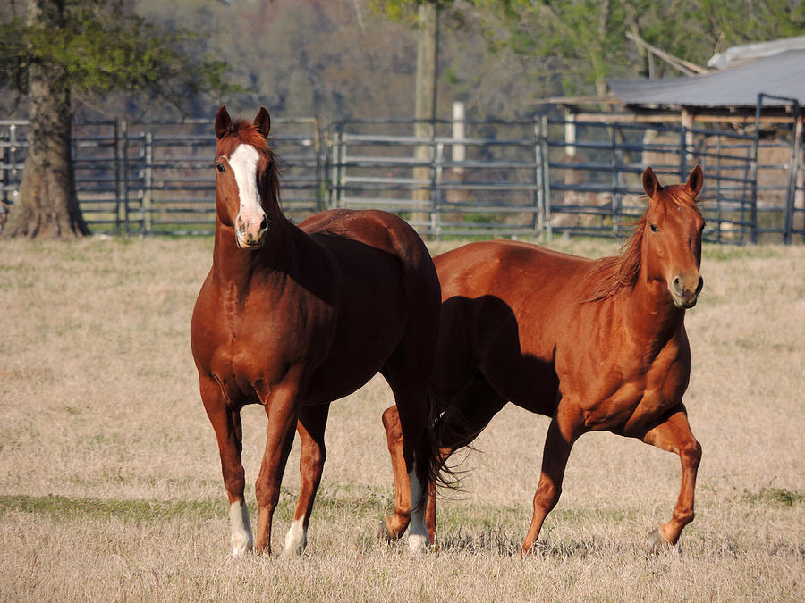 Digital Photography Photograph - Happy Horses Hoofin-it by Kim Pate