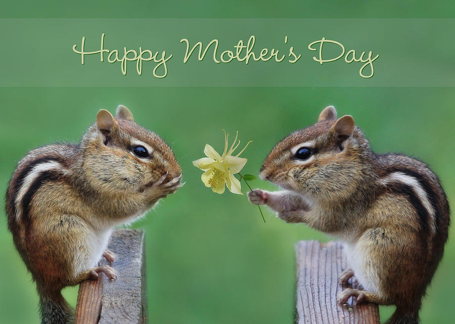 Happy Mothers Day Photograph  - Happy Mothers Day Fine Art Print