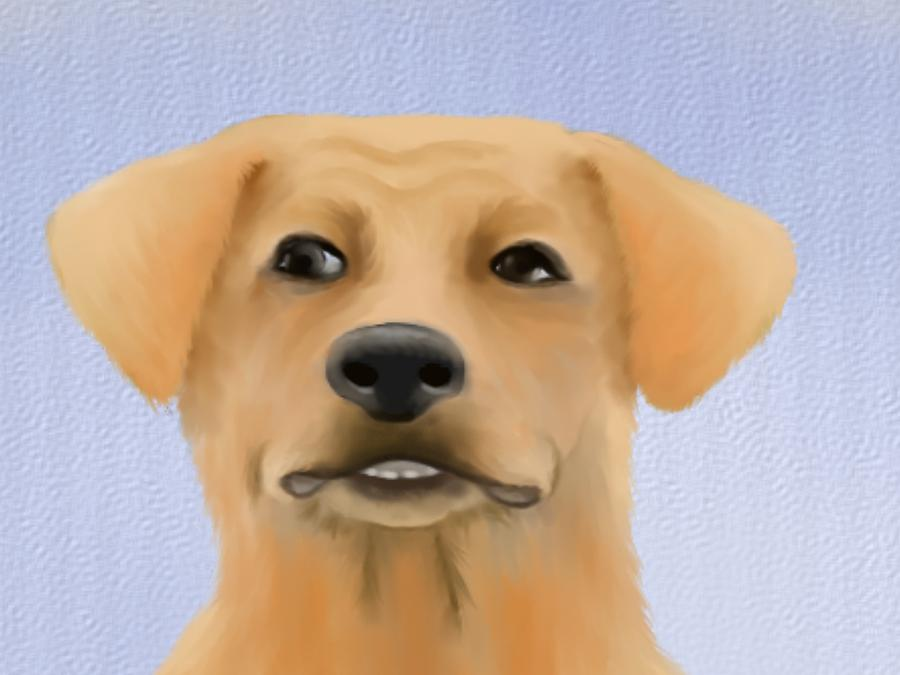 Harley The Labrador Dog Close Up Digital Art  - Harley The Labrador Dog Close Up Fine Art Print
