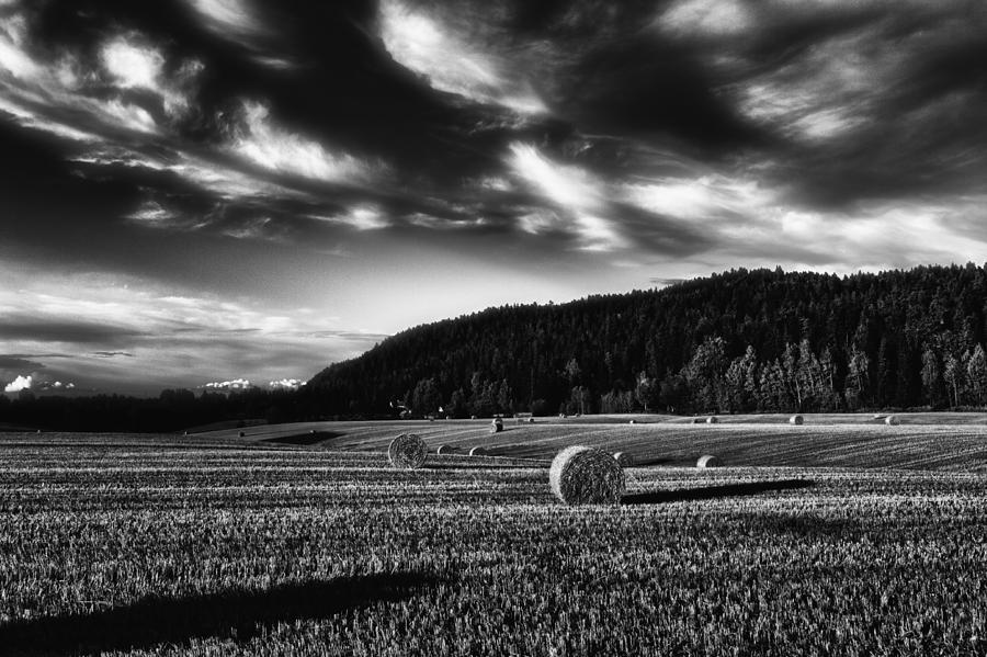 Harvest Photograph
