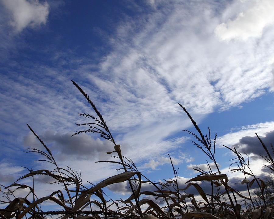 Harvest Sky Photograph