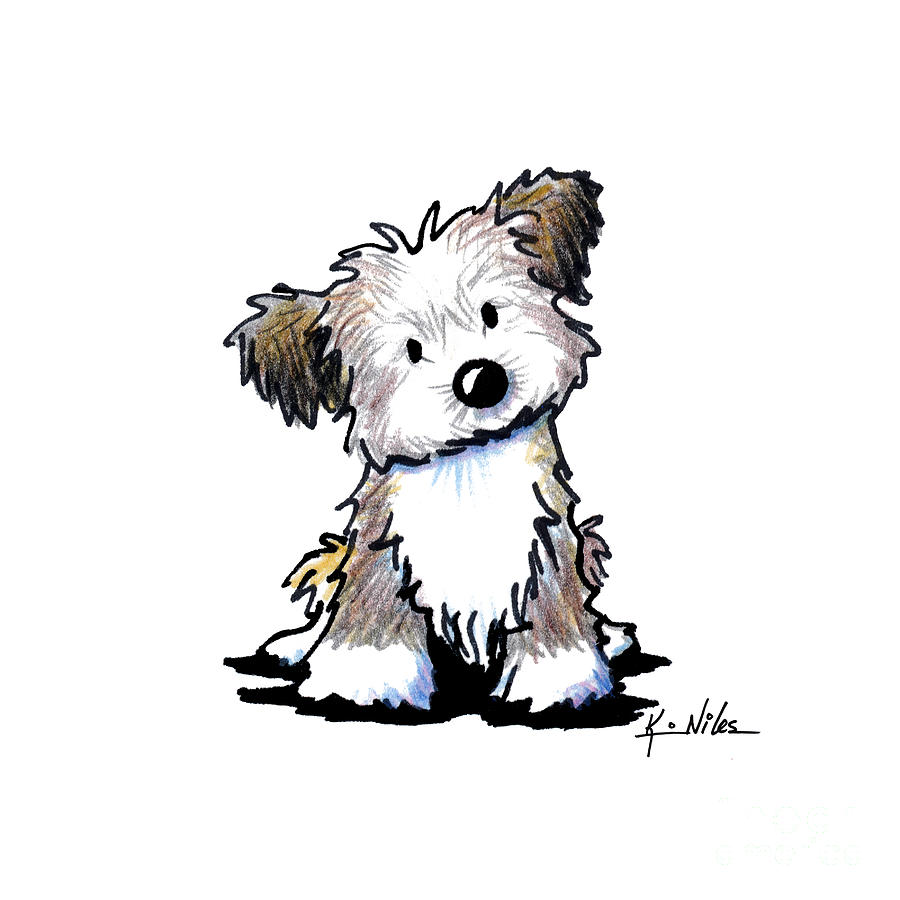 Havanese Puppy Drawing by Kim Niles