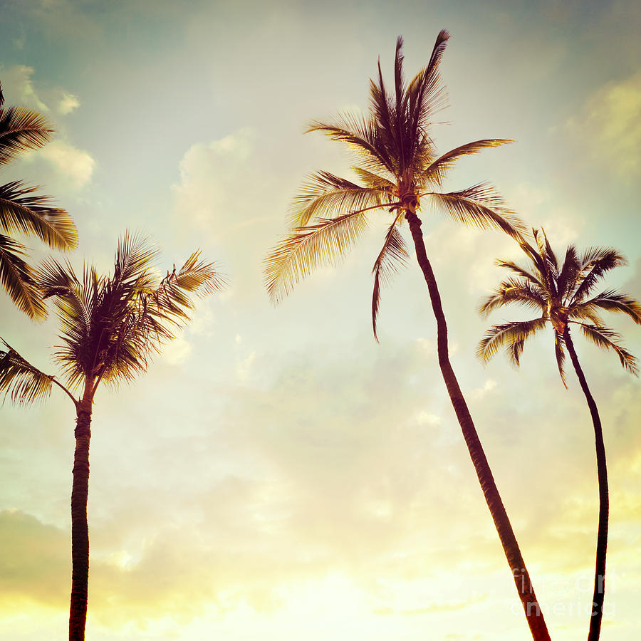 Hipster Art Prints Hawaiian palms - hipster photoHipster Art Prints