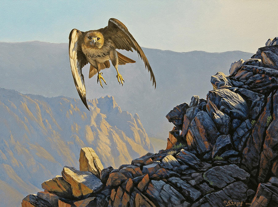 Wildlife Painting - Hawk Above Beartooth Pass by Paul Krapf