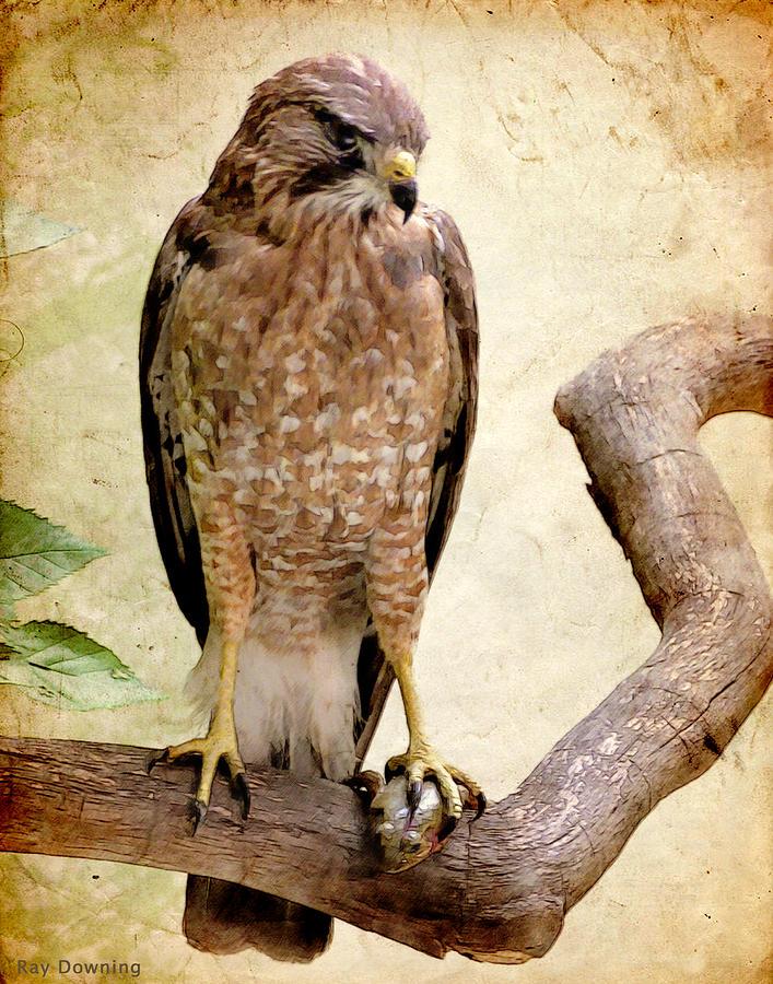 Hawk With Fish Digital Art