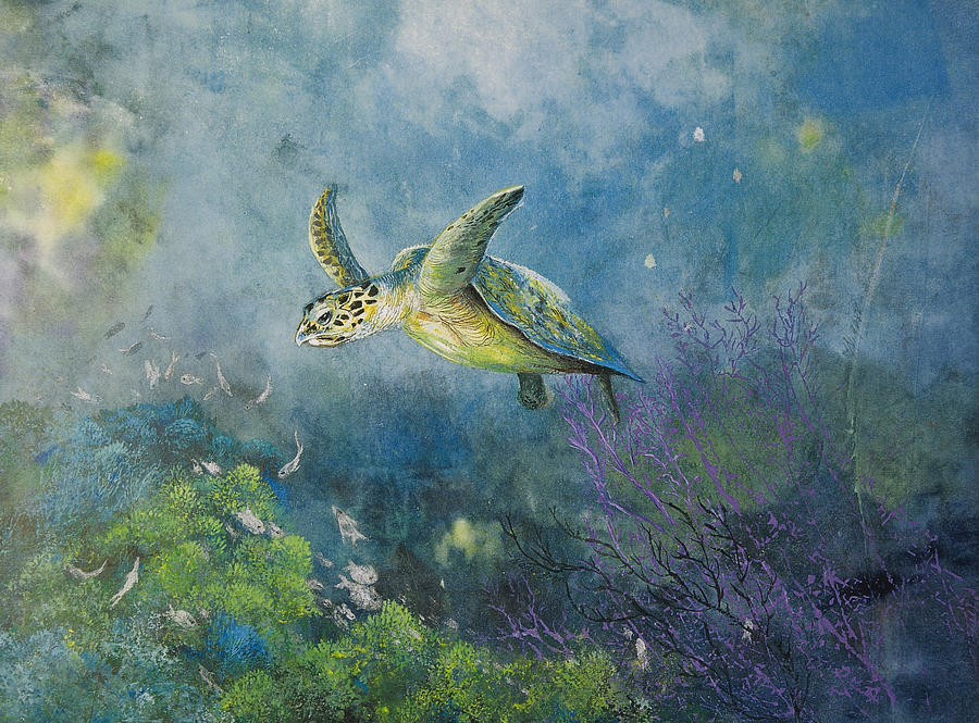 Hawkbill Turtle Feeding On Sponges Mixed Media  - Hawkbill Turtle Feeding On Sponges Fine Art Print