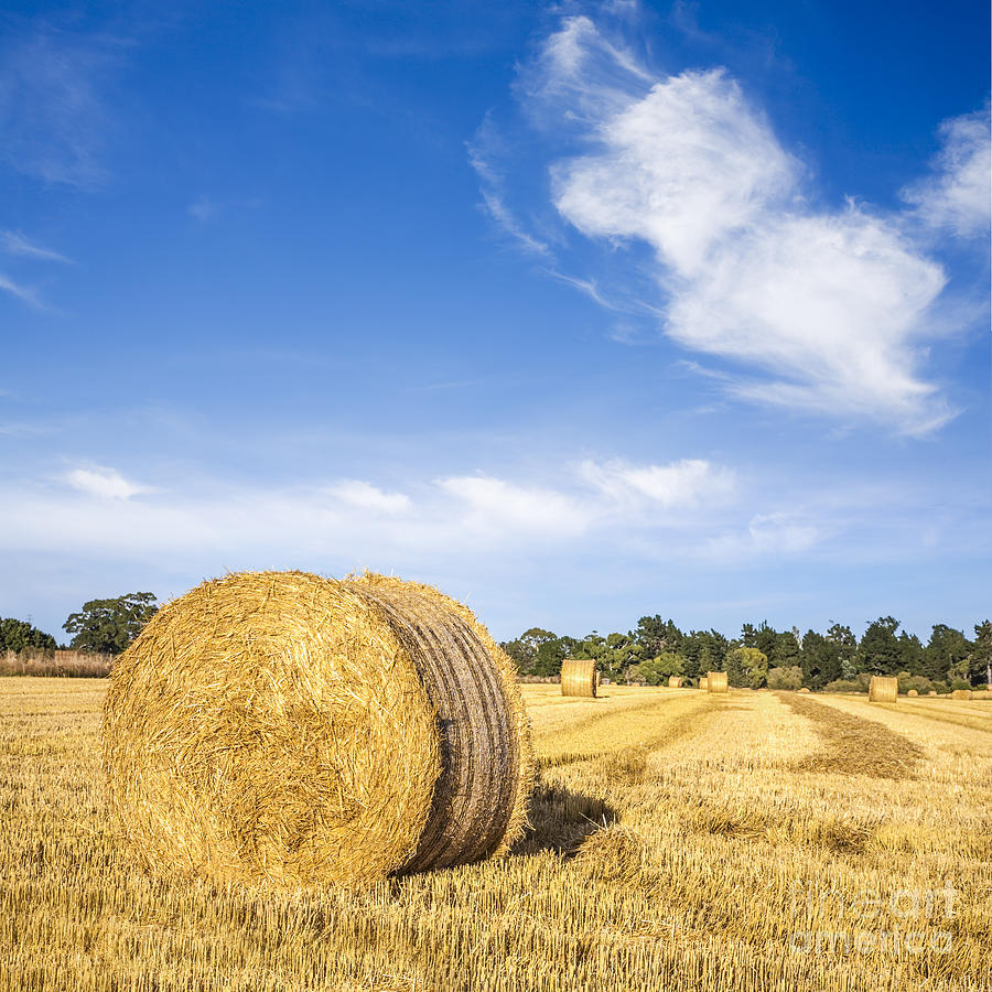 Hay Bales Under Deep Blue Summer Sky Photograph