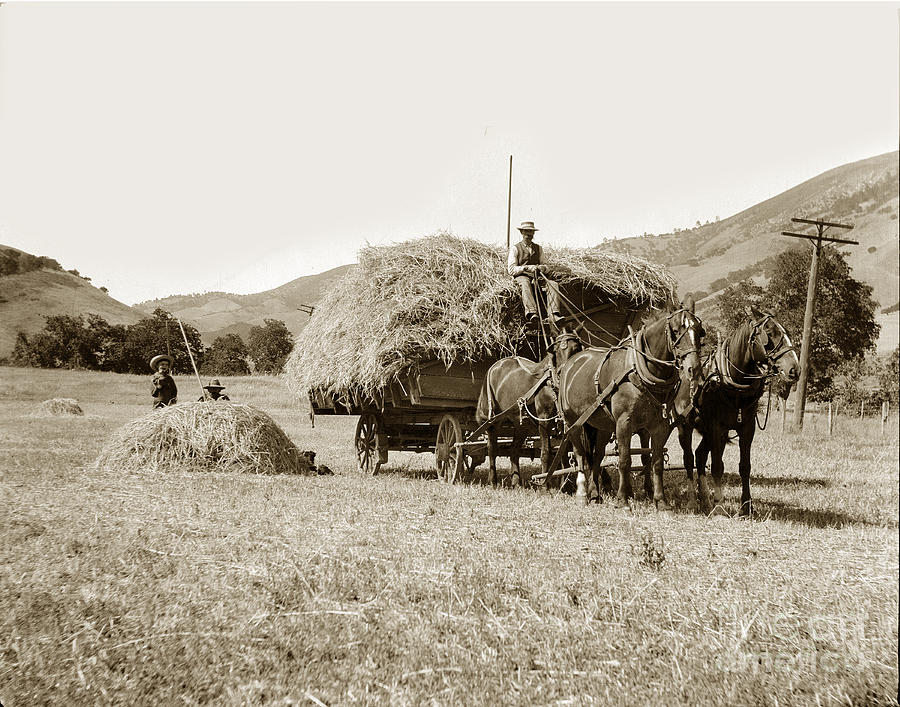 Horse Drawn Wagon Horse Drawn Hay Wagon Carmel