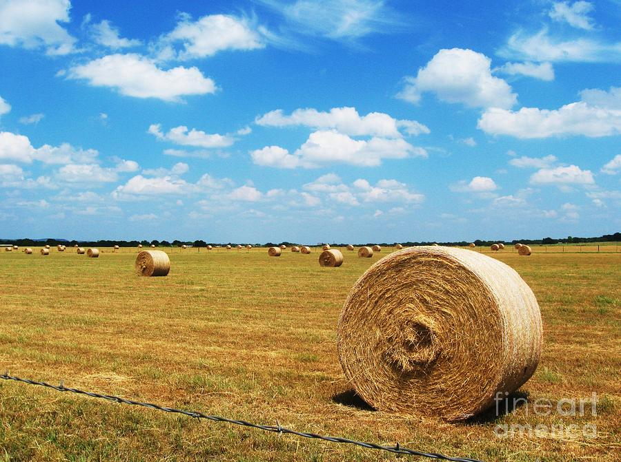Hayfield Photograph  - Hayfield Fine Art Print