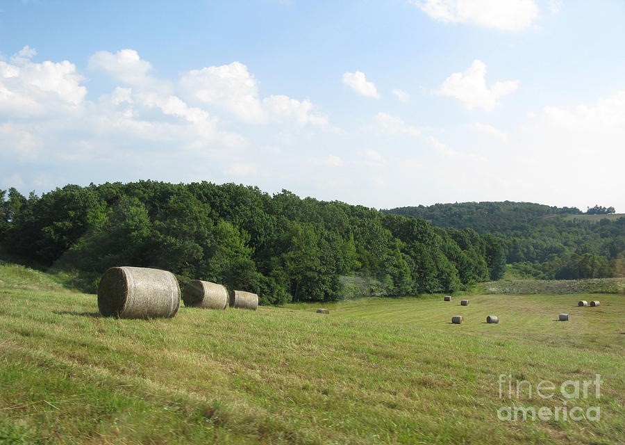 Haymaking Season Photograph