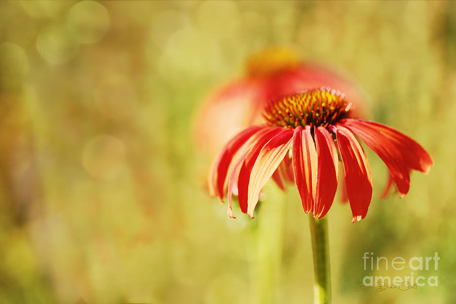 Hazy Daze Photograph  - Hazy Daze Fine Art Print