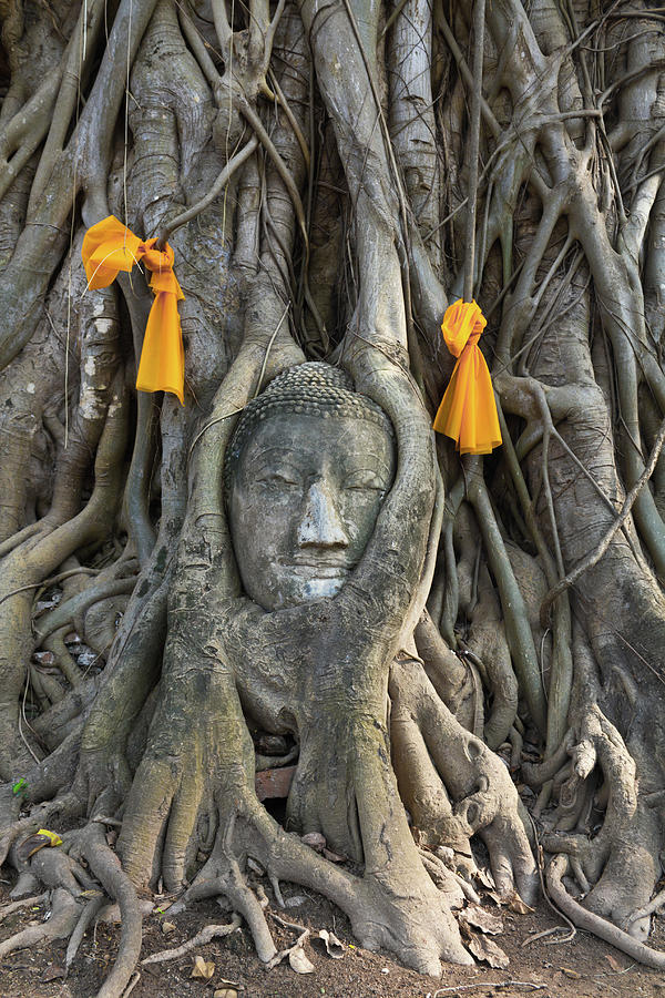 Head Of The Sand Stone Buddha Image Photograph  - Head Of The Sand Stone Buddha Image Fine Art Print