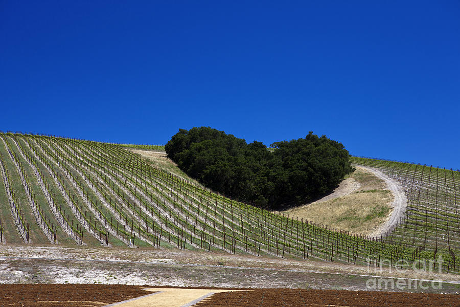 Heart Hill Paso Robles Photograph  - Heart Hill Paso Robles Fine Art Print