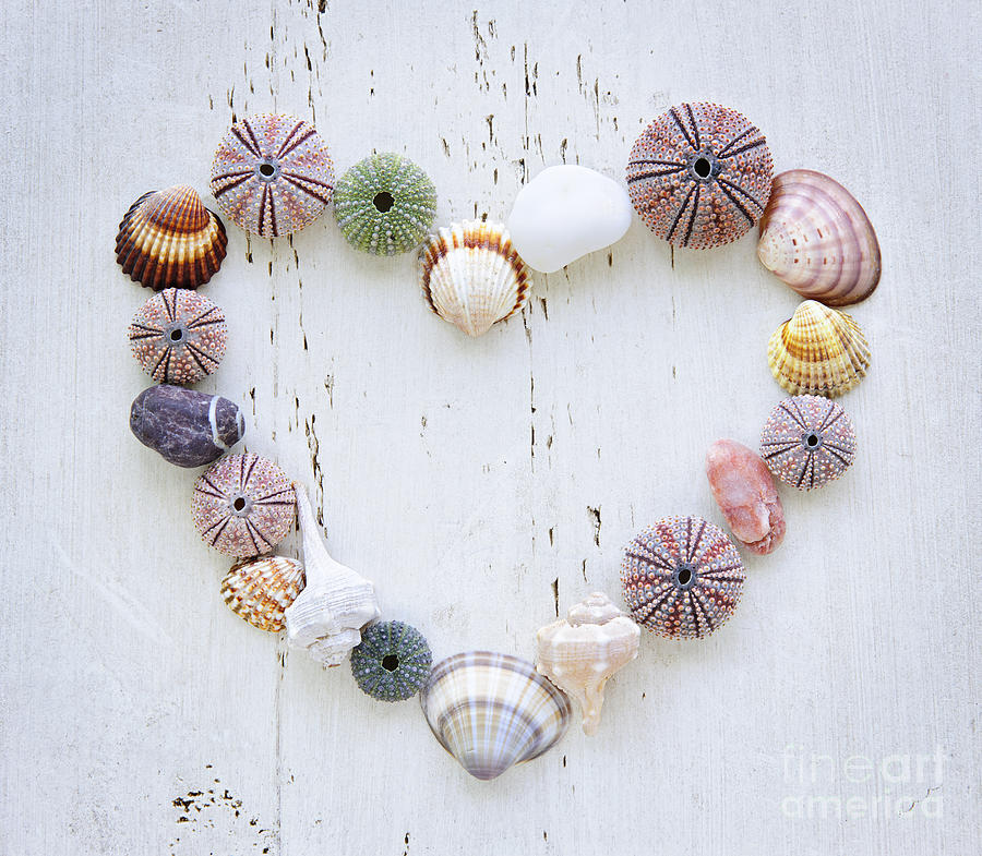 Heart Of Seashells And Rocks Photograph