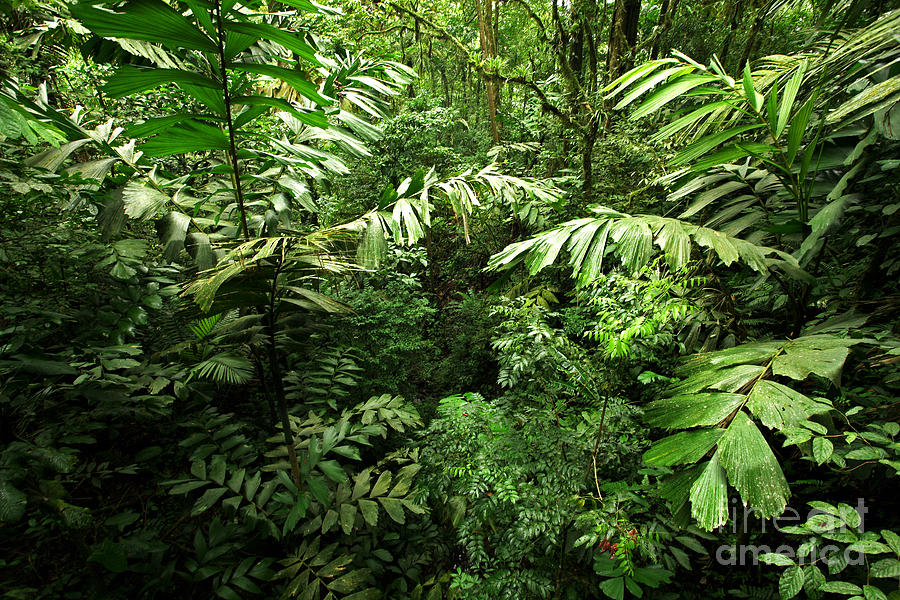 Heart Of The Rain Forest - Costa Rica Photograph
