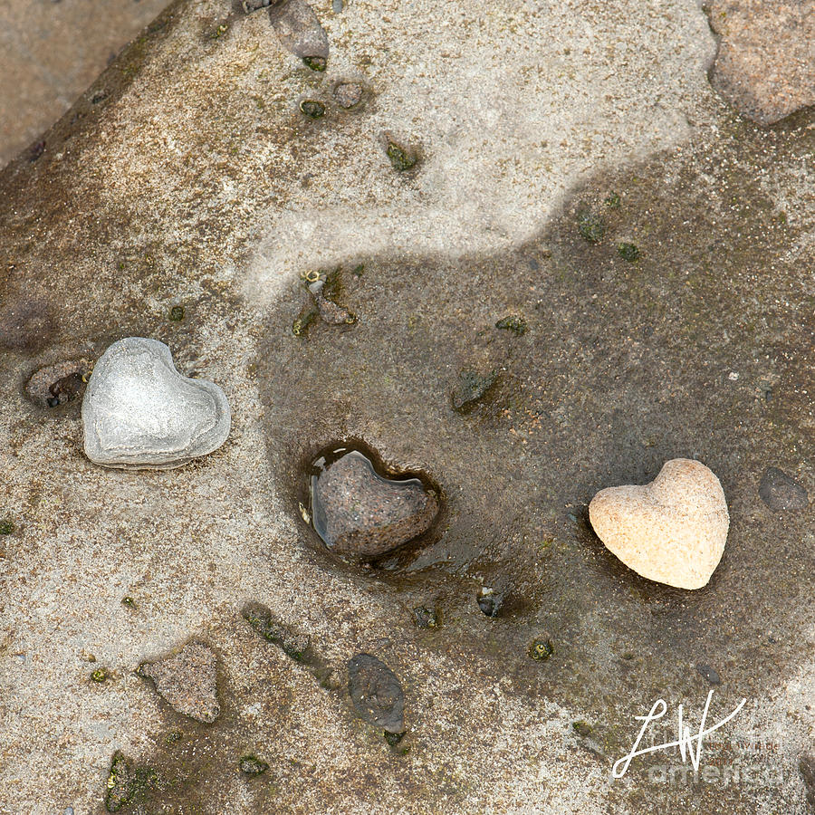 Heart Rock Love Photograph  - Heart Rock Love Fine Art Print
