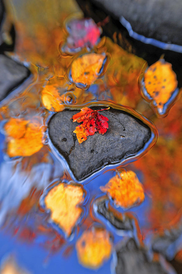 Heart Rock Reflections Photograph  - Heart Rock Reflections Fine Art Print