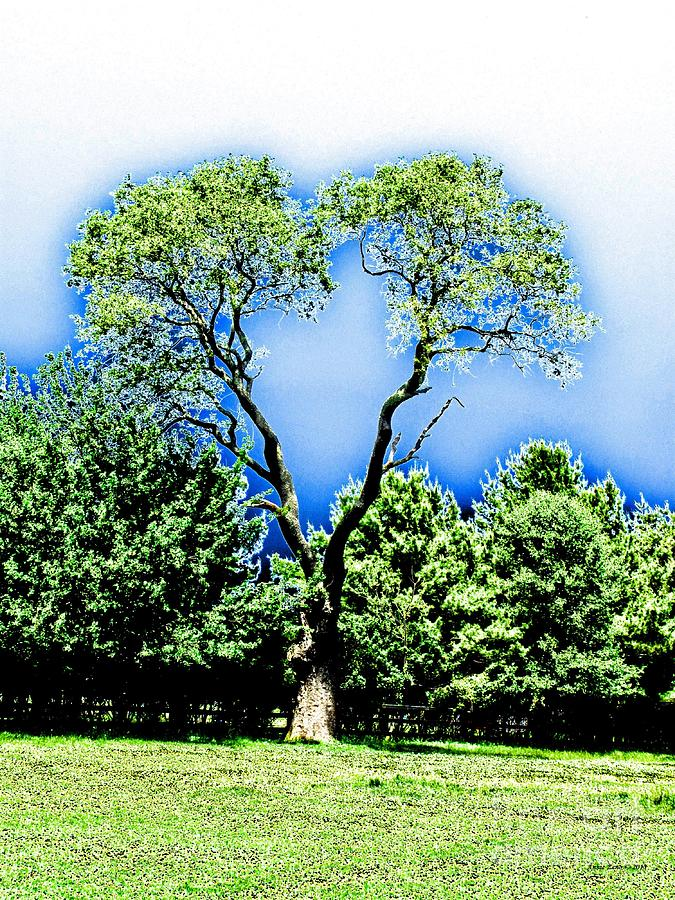 Heart Tree Photograph  - Heart Tree Fine Art Print