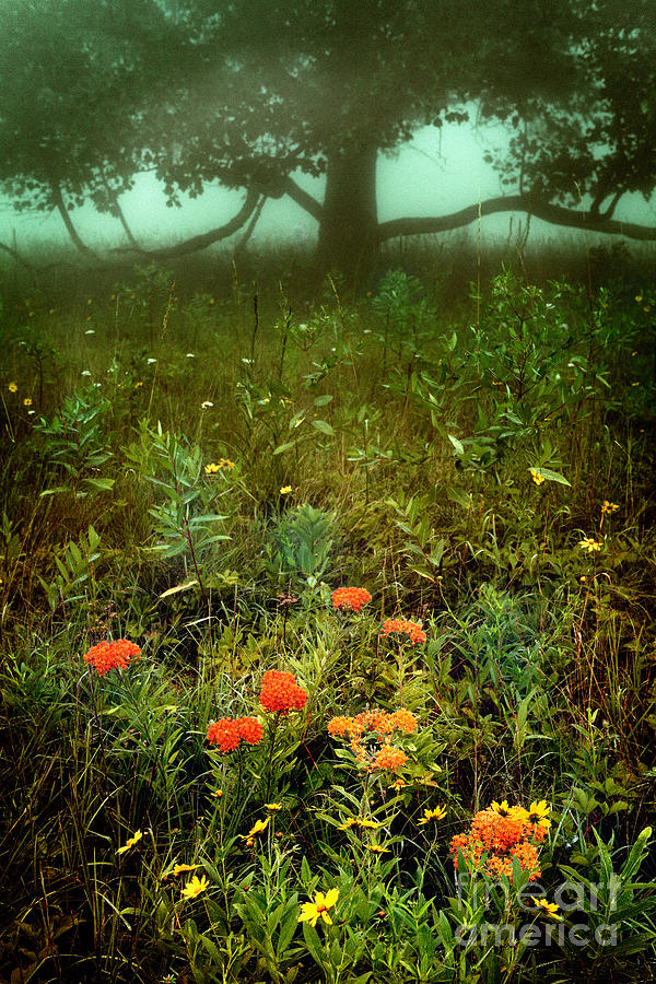 Heaven In The Gloom I - Blue Ridge Parkway Photograph