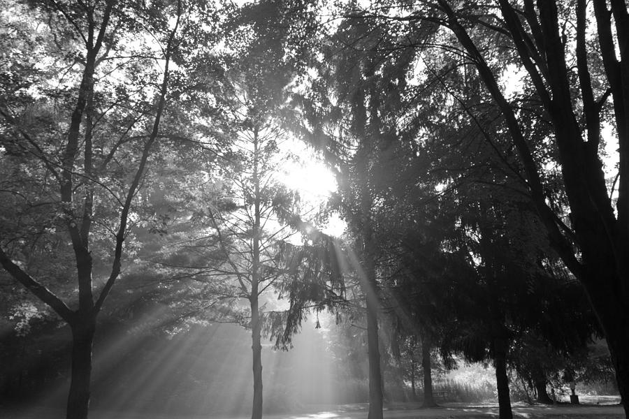 Heavenly Light Photograph  - Heavenly Light Fine Art Print