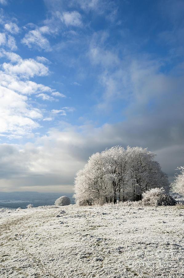 Annegilbert Photograph - Heavy Frost by Anne Gilbert