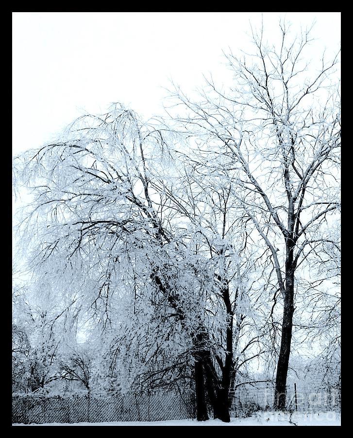 Heavy Ice Tree Redo Photograph