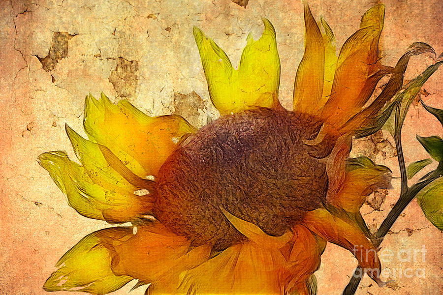 Helianthus Digital Art  - Helianthus Fine Art Print