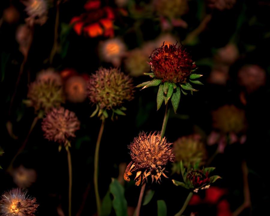 Hello Autumn Photograph
