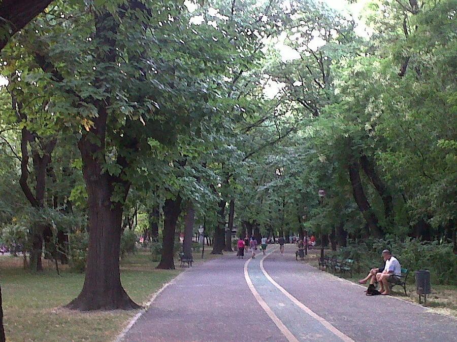 Herastrau Park Photograph