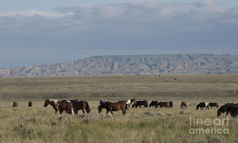 Herd Of Wild Horses Photograph