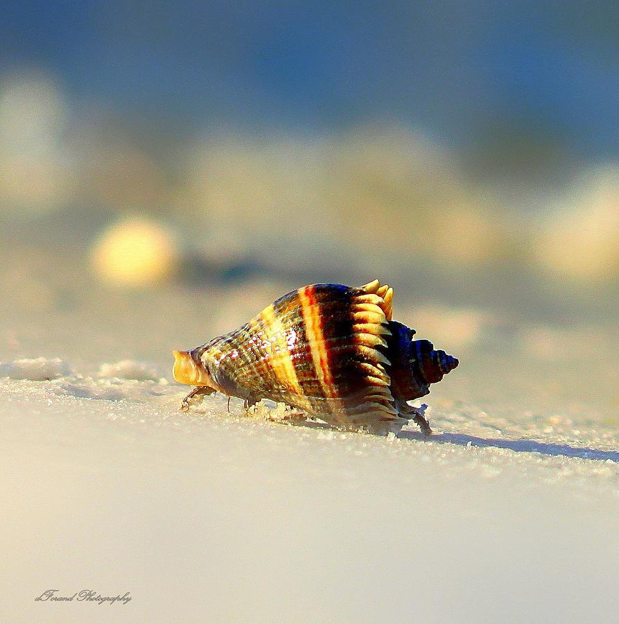 Hermit Crab  Photograph
