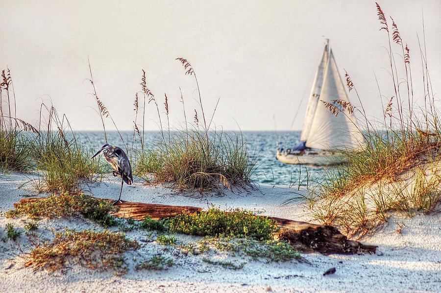 Heron And Sailboat Larger Sizes Photograph  - Heron And Sailboat Larger Sizes Fine Art Print