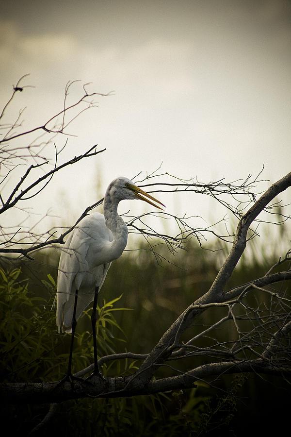 Heron At Dusk Photograph