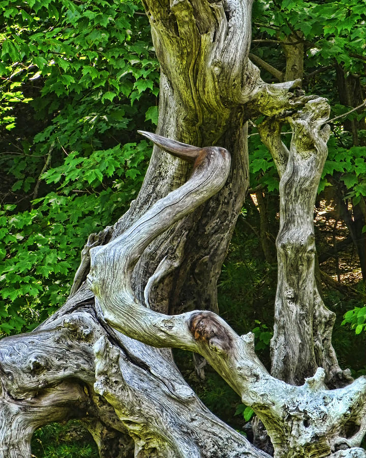 Heron Driftwood Photograph