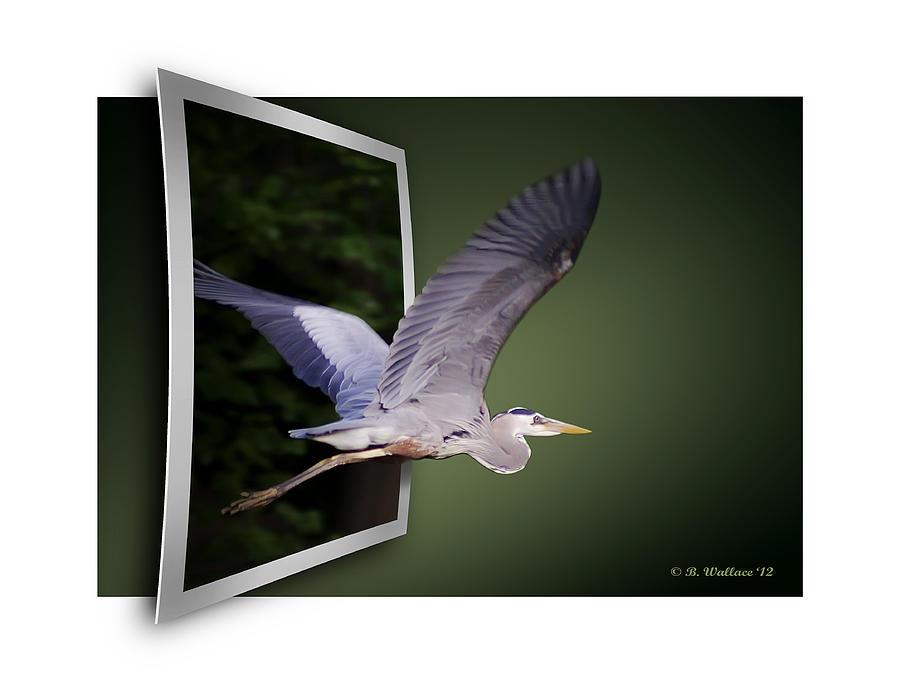 Heron In Flight - Oof Photograph