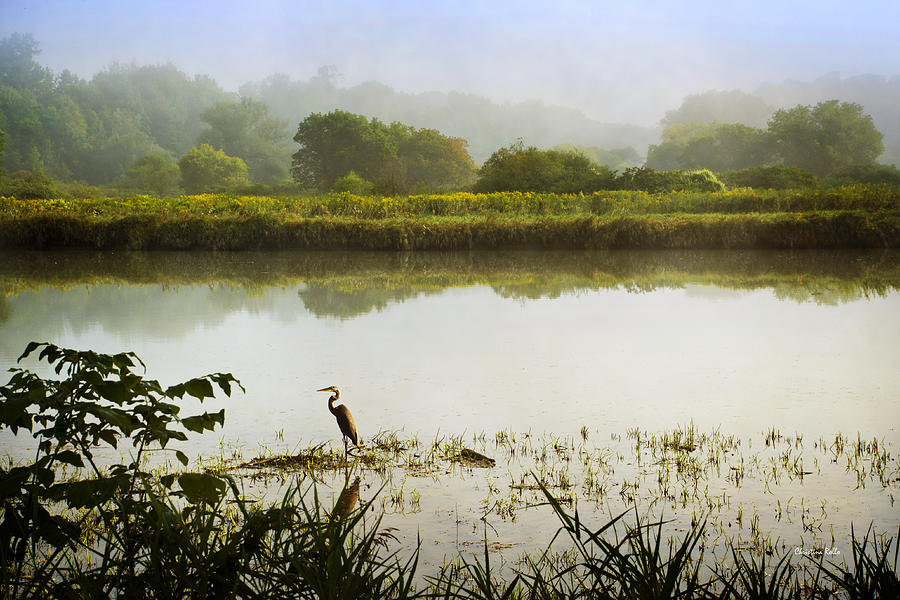 Heron On Foggy River Sunrise Landscape Photograph