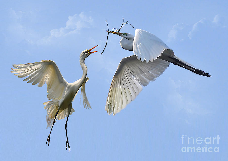Birds Photograph - Hey...go Find Your Own Stick by Kathy Baccari