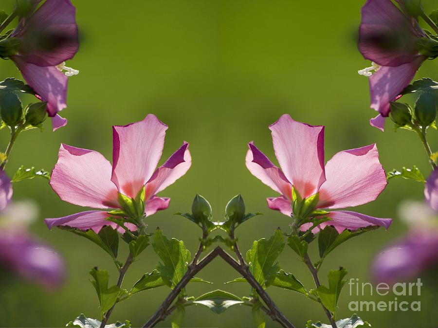 Hibiscus 07 Mirror Image Photograph