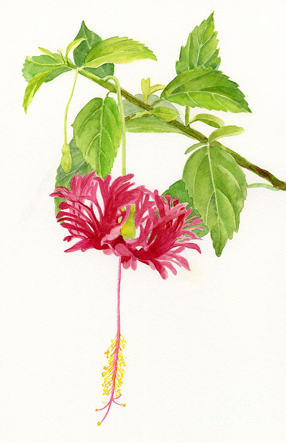 Hibiscus Chinese Red Lantern Painting