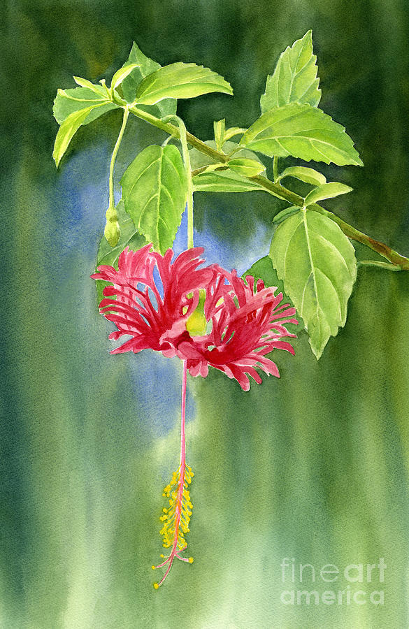Hibiscus Chinese Red Lantern With Background Painting