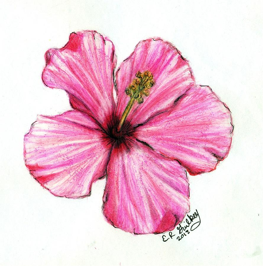 Hibiscus Drawing by Elizabeth Guilkey