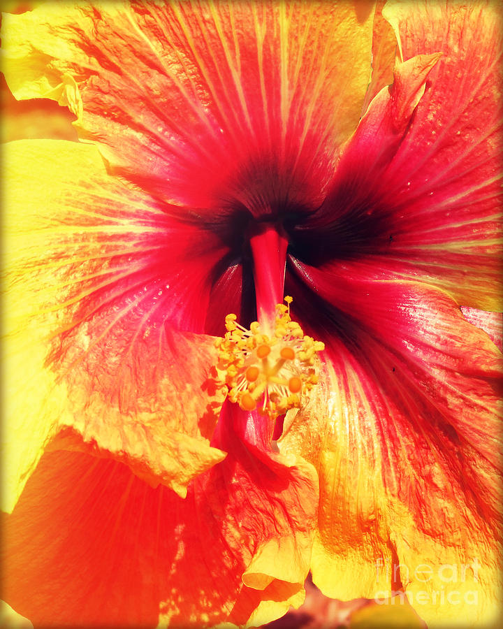 Hibiscus Photography Light Leaks Pyrography  - Hibiscus Photography Light Leaks Fine Art Print